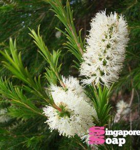 Pure Tea Tree Essential Oil 2