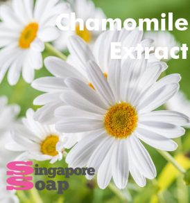 Chamomile Extract Singapore