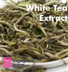 White Tea Extract Singapore