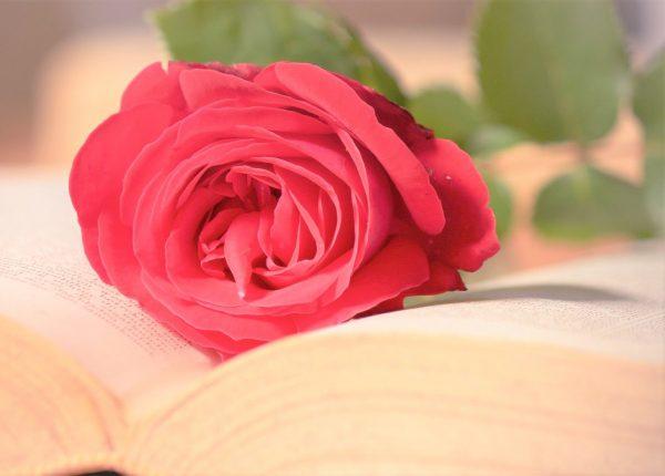 Rose Fragrance Oil