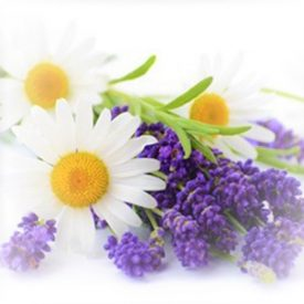 Lavender Chamomile Fragrance Oil