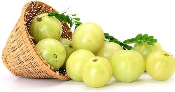 Organic Amla Oil (Virgin, Cold Pressed)
