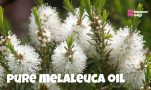 Where to Buy Melaleuca Oil in Singapore