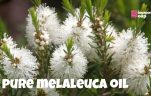 Where to Buy Melaleuca Oil in Singapore