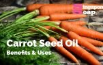 Carrot Seed Oil Benefits & Uses