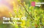 Tea Tree Oil Benefits & Uses