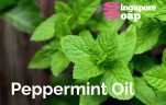Where to Buy Peppermint Oil in Singapore
